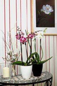Prendersi cura delle orchidee - farle crescere in casa