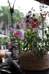 Prendersi cura delle orchidee - l'habitat