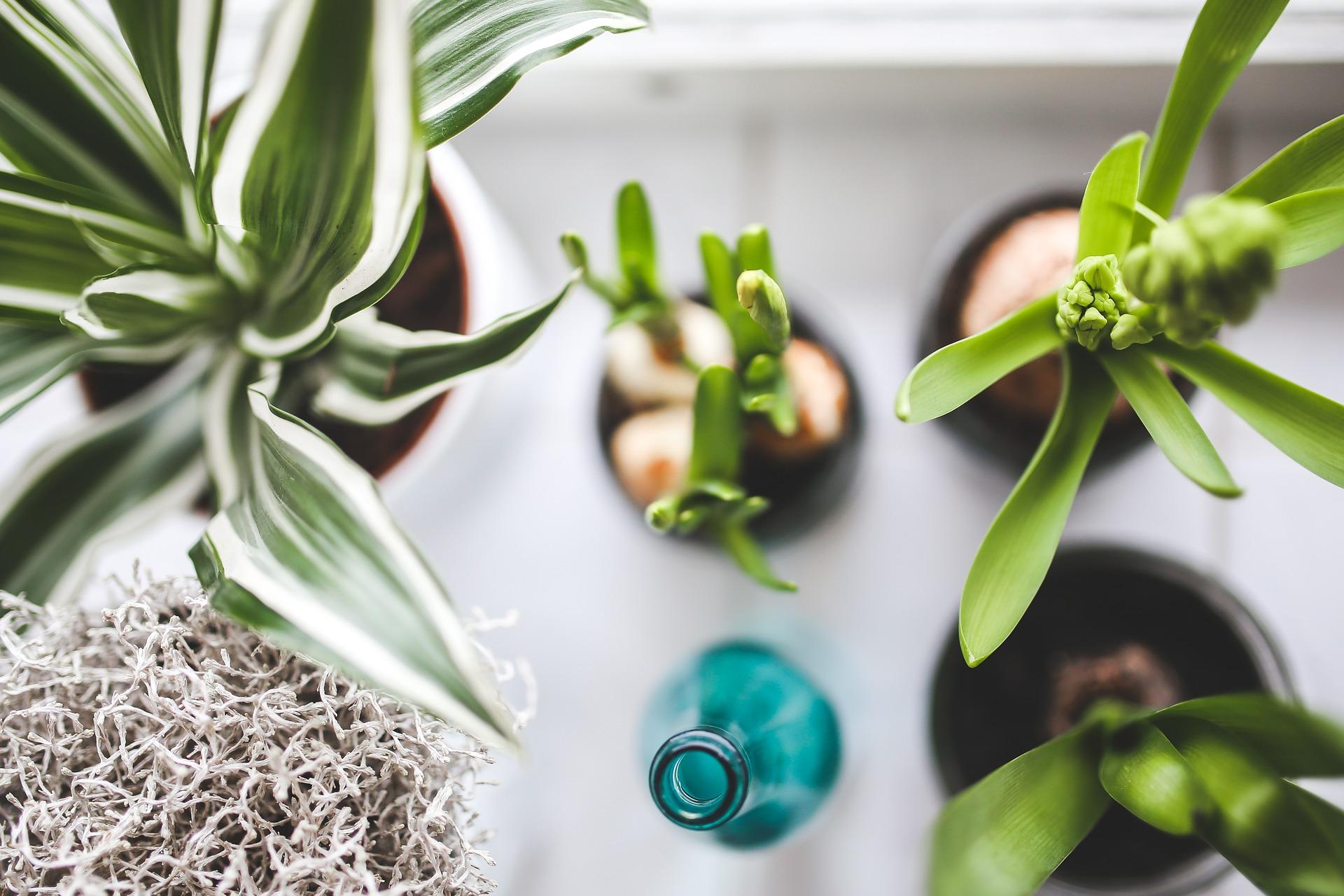 Scegliere le piante adatte per l'ufficio