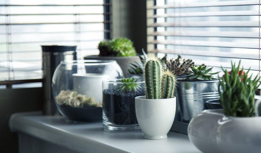 Mode e tendenze per la casa 2016: un eccesso di verde in casa!