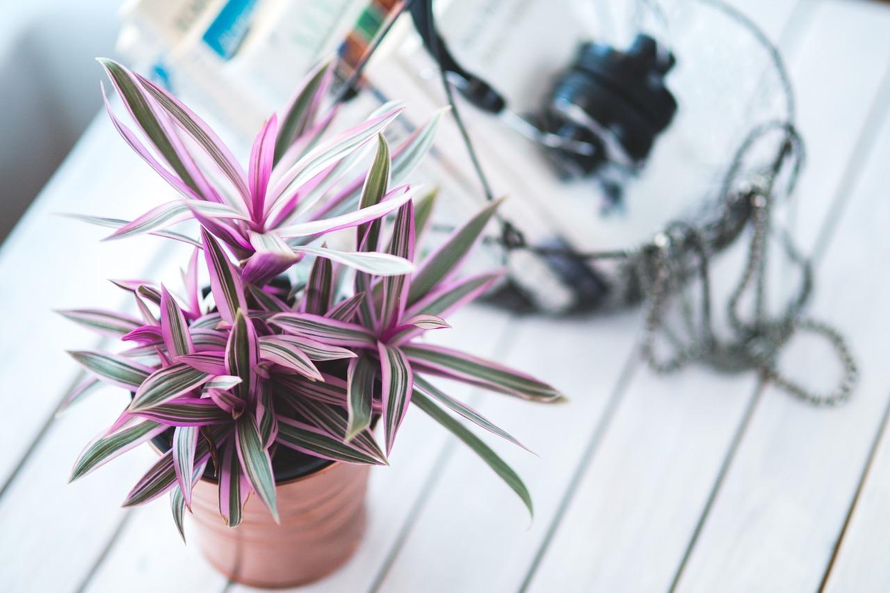Mode e tendenze per la casa 2016: piante ovunque!