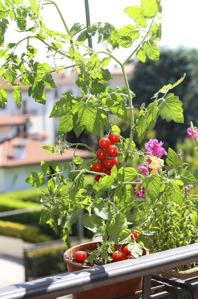Trasforma il tuo terrazzo in un orto - Green Mag