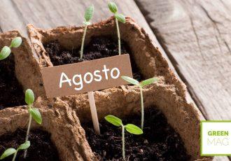 cosa piantare ad agosto in giardino e nell'orto