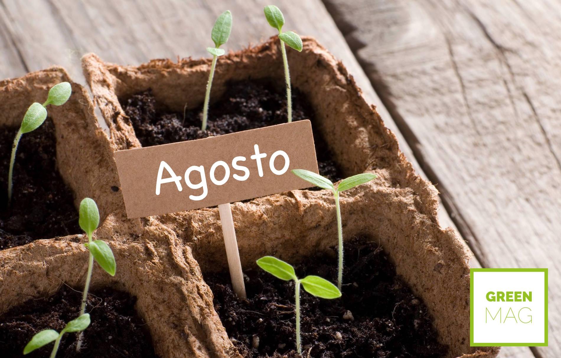Cosa piantare ad agosto green mag for Cosa piantare nell orto adesso