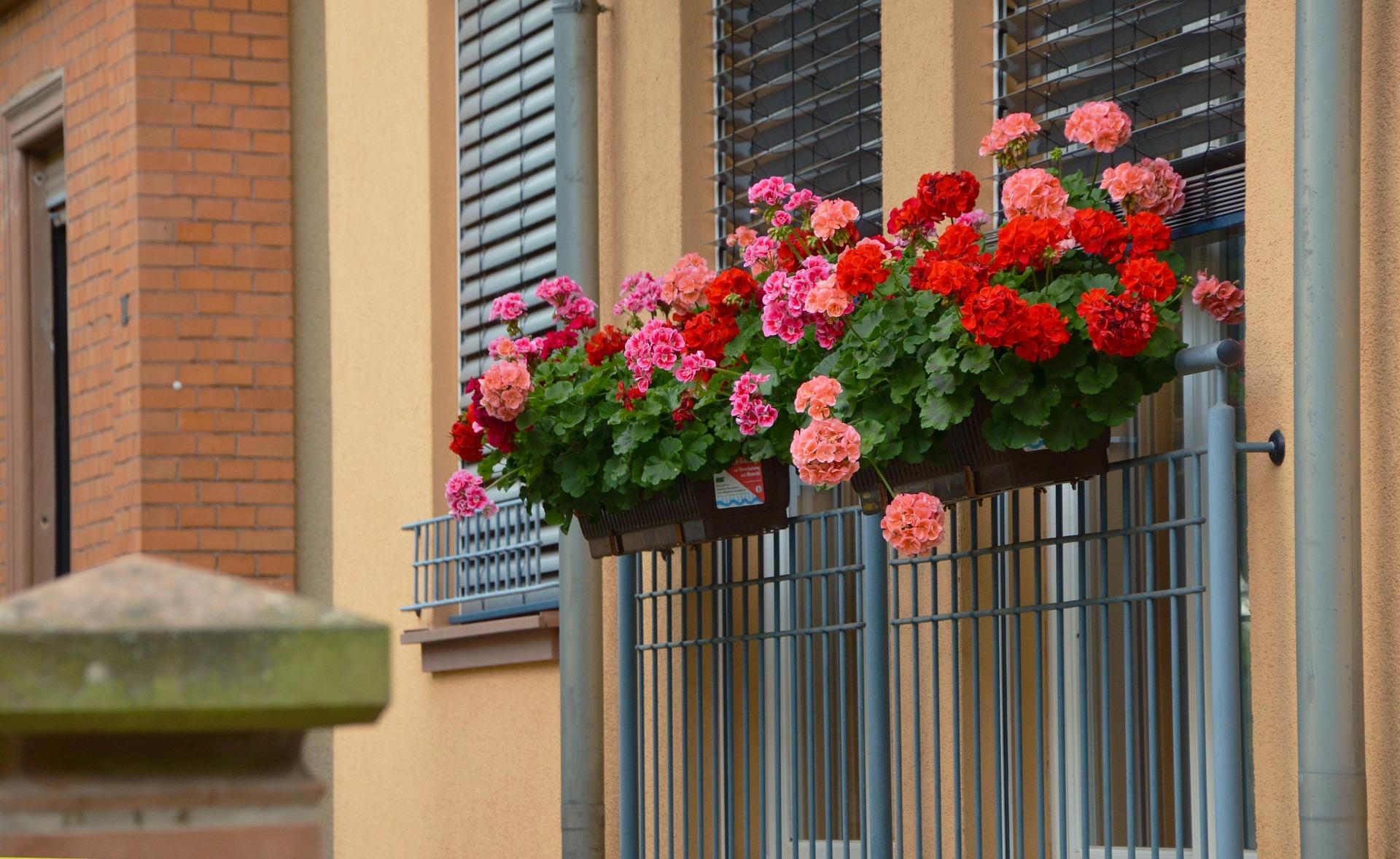 piante da balcone - come avere il balcone fiorito tutto l'anno