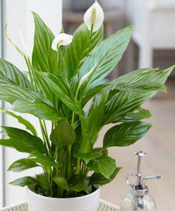 dividere gli spazi dell'ufficio con le piante