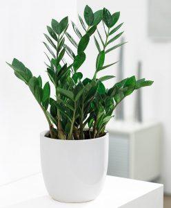 dividere gli spazi di lavoro con le piante verdi