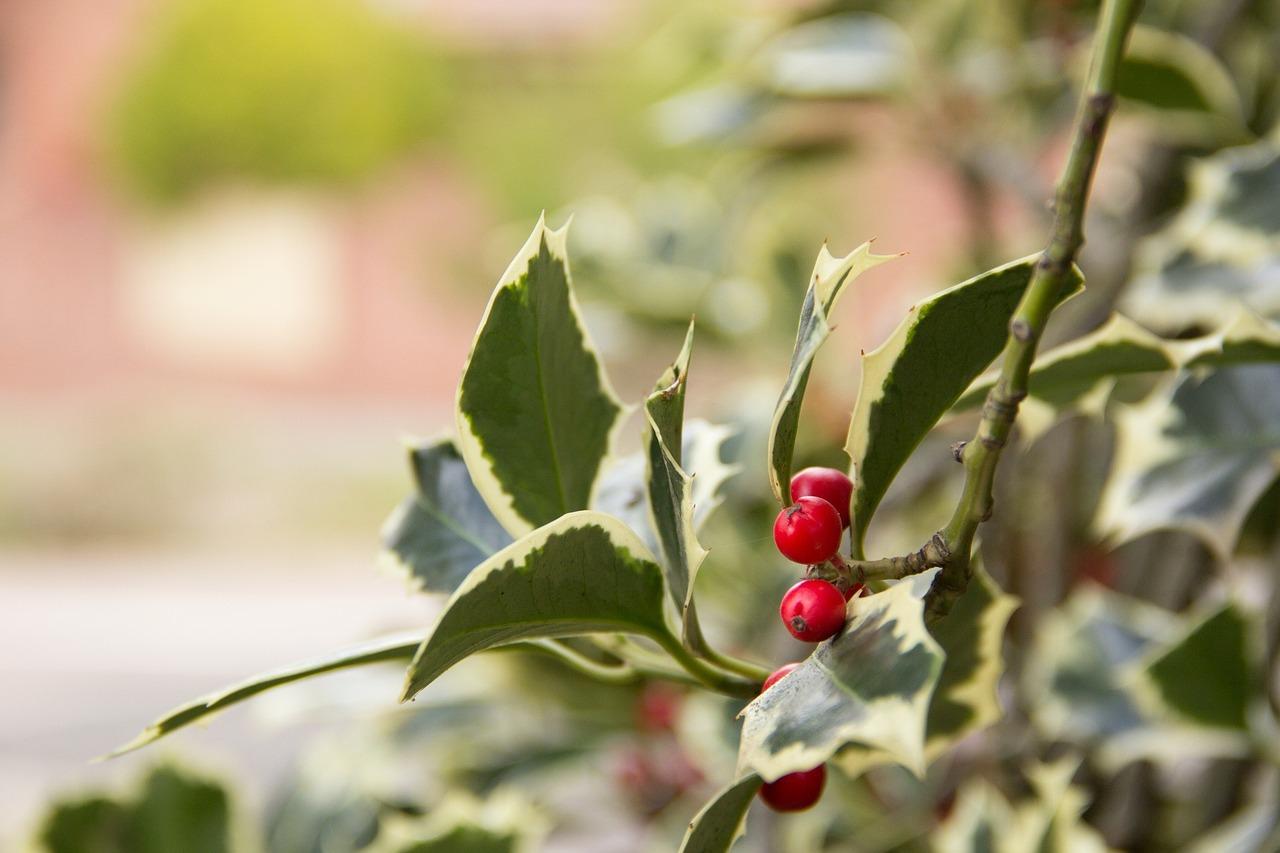 9-piante-che-decorano-il-terrazzo-tutto-anno