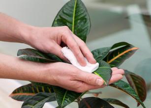 lavare-le-foglie-e1452623195768