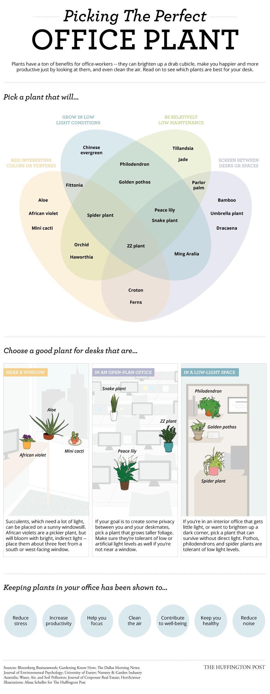come scegliere le piante per l'ufficio