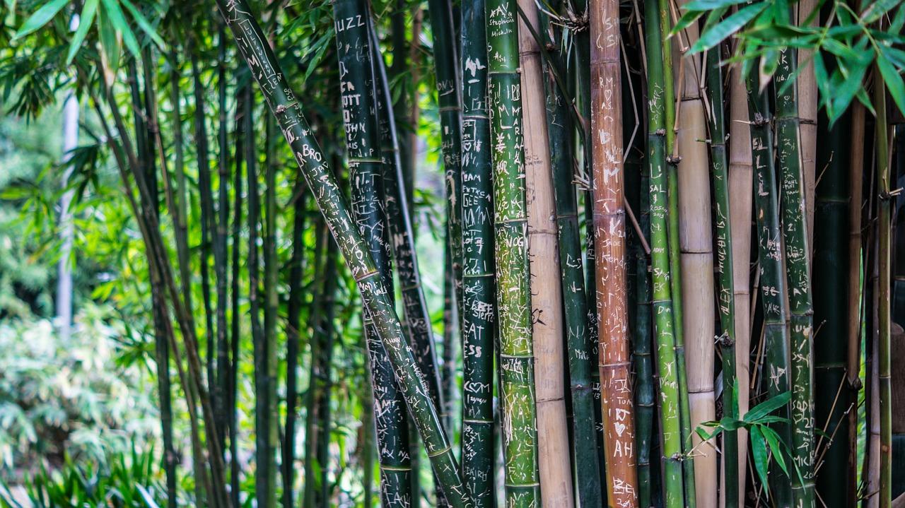 le 10 piante che restano verdi tutto l'anno