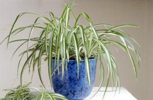 quali piante usare per arredare l'ufficio