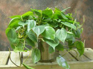che piante usare per arredare l'ufficio?