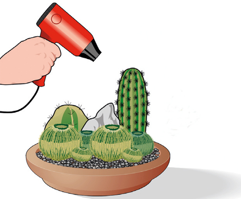 pulire piante grasse