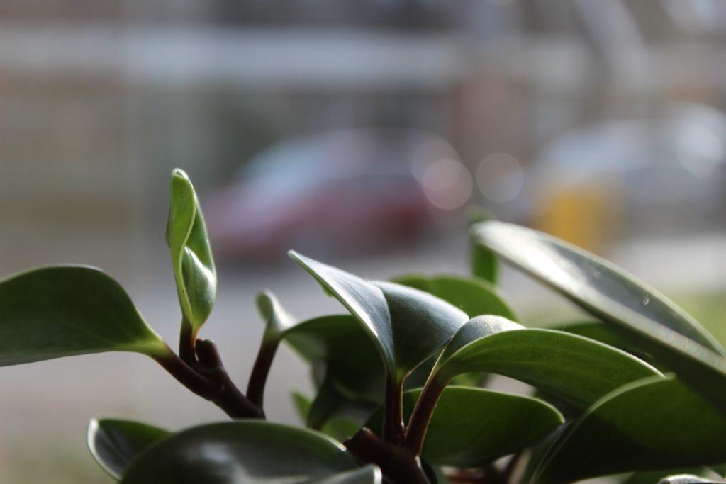 plants-1150014_1920