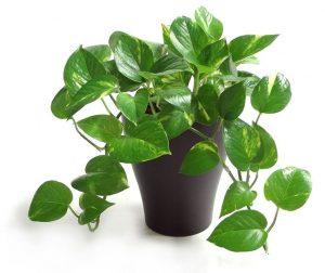 arredare l'ufficio con le piante