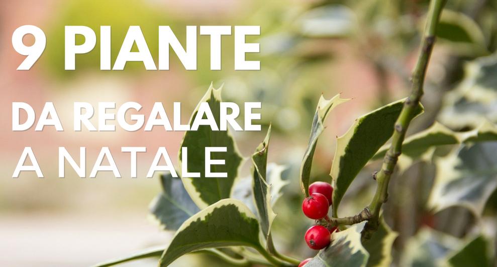 Piante Da Regalo : Piante da regalare a natale green mag