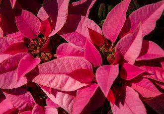 Il significato della stella di Natale