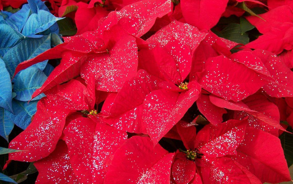 9 Piante Da Regalare A Natale Green Mag