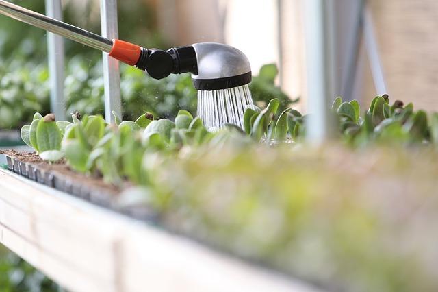 quanto-vanno-annaffiate-le-piante-da-appartamento