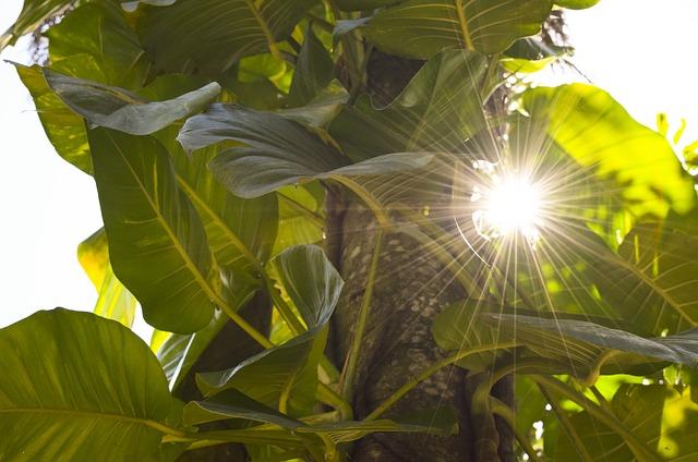 non esporre le piante d'appartamento al sole