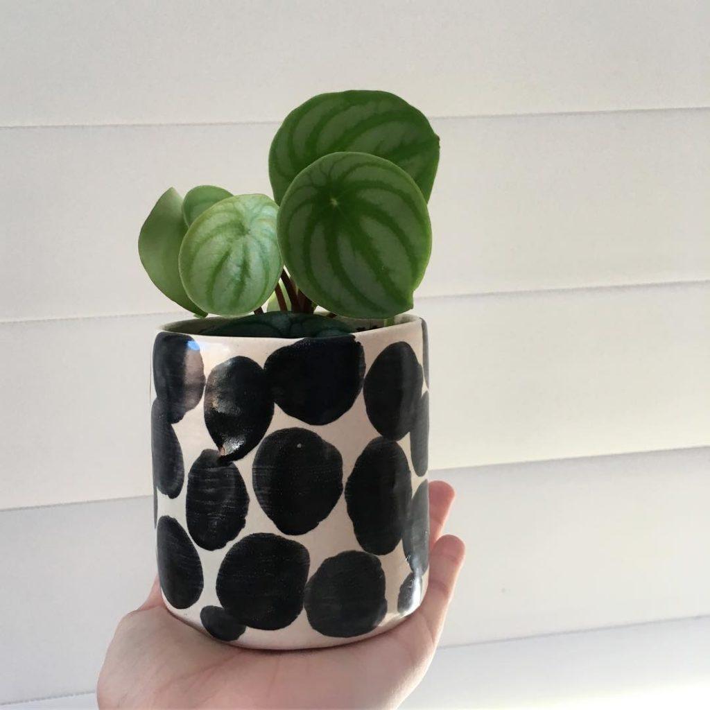 Tendenze 2017 per vasi e porta vasi per piante da interni for Vasi giapponesi