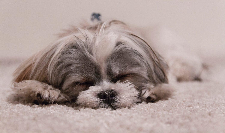 I tappeti sono perfetti per mantenere la casa calda in inverno