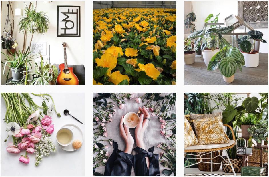 profilo instagram ecologia e sostenibilità